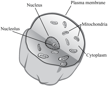 Cell structure quizlet